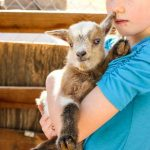 5 Tips to Use When Picking the Best Goat Milk Formula for Baby